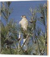 Coopers Hawk In Tree Wood Print