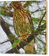 Cooper's Hawk Wood Print