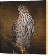 Coopers Hawk Portrait 1 Wood Print