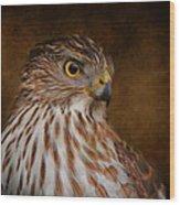 Coopers Hawk Portrait 2 Wood Print