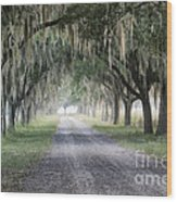 Coosaw Fog Avenue Of Oaks Wood Print