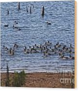 Coots On The Water Wood Print