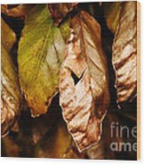 Copper Beech Leaves Wood Print