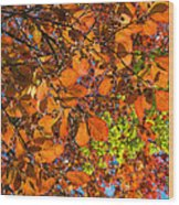 Copper Beech Wood Print