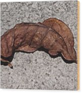 Copper Colored Leaf On Concrete Wood Print