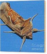 Copper Crest Shield Moth Wood Print
