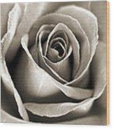 Copper Rose Wood Print