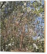 Copper Willow Wood Print by Kim Bleeker