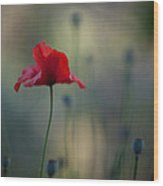 Coquelicot Impression Wood Print