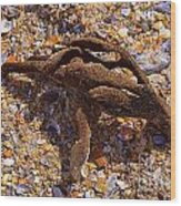 Coral Beach Treasure  Wood Print