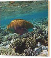 Coral Cruiser Wood Print