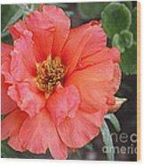 Coral Desert Rose Wood Print