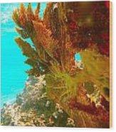 Coral Fern Wood Print