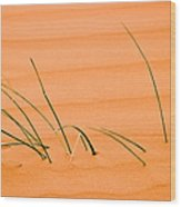 Coral Pink Sands 1 Wood Print by Adam Romanowicz