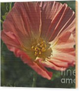 Coral Poppy 1 Wood Print