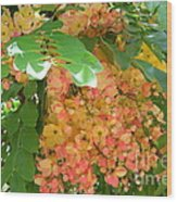 Coral Shower Tree Wood Print