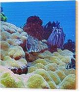Corals Underwater Wood Print