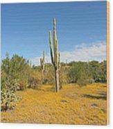 Cordon Cactus And Yellow Wildflowers Wood Print