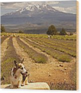 Corgi And Mt Shasta Wood Print