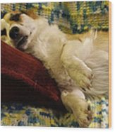 Corgi Asleep On The Pillow Wood Print