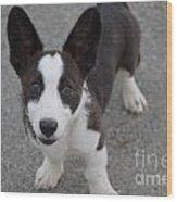Corgi Puppy Wood Print