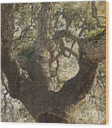 Cork Oak Tree Wood Print