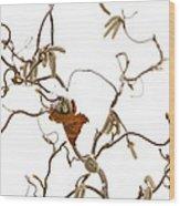 Corkscrew Wood Print by Anne Gilbert