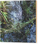 Corkscrew Swamp 16 Wood Print