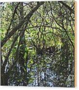Corkscrew Swamp 3 Wood Print