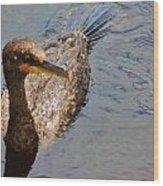 Cormorant After A Swim Wood Print