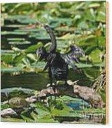 Cormorant And Turtle Wood Print