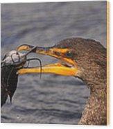Cormorant Catching Catfish Wood Print