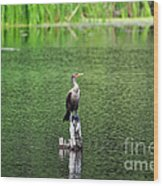 Cormorant Chilling Wood Print