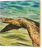 Cormorant On The Move Wood Print