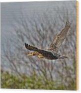 Cormorant On Wings Wood Print