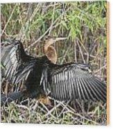 Cormorant Wingspan Wood Print