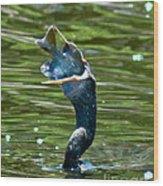 Cormorant With Catch Wood Print