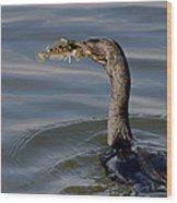 Cormorant With Fish Wood Print