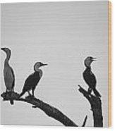 Cormorants-black And White Wood Print