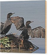 Cormorants Sunbathing Wood Print
