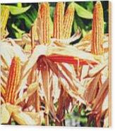 Corn Wood Print