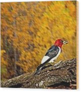 Corn Fed Woodpecker Wood Print