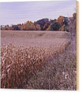 Corn Field In The Fall Wood Print