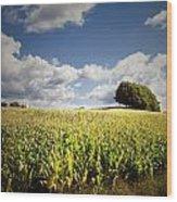 Corn Field Wood Print