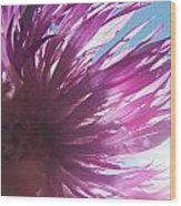 Corn Flower And Light Wood Print