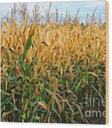 Corn Harvest Wood Print by Terri Gostola