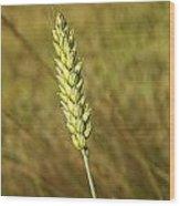 Corn Head Wood Print
