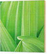 Corn Lily Leaf Detail Yosemite Np California Wood Print
