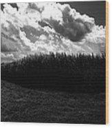 Corn Maze 03bw Wood Print