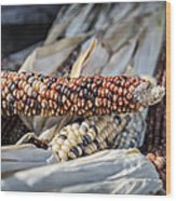 Corn Of Many Colors Wood Print by Caitlyn  Grasso